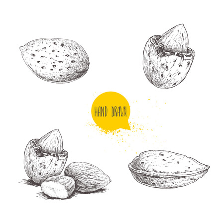 Hand drawn sketch style almond set. Single, group  seeds and almond in nutshell. Organic food vector illustrations collection isolated on white background. Stok Fotoğraf - 107512004