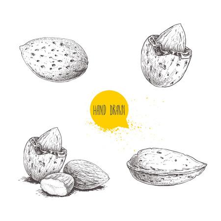 Hand gezeichneter Mandelsatz der Skizzenart. Einzel-, Gruppensamen und Mandeln auf den Punkt gebracht. Bio-Lebensmittel-Vektorillustrationssammlung lokalisiert auf weißem Hintergrund.