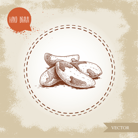 Brazilian nuts group. Sketch style hand drawn vector illustration. Isolated on old background. Healthy and ecological food. Vegetarian snack with proteine. Stock Vector - 112034440