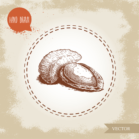 Brazilian nuts group. Sketch style hand drawn vector illustration. Isolated on old background. Healthy and ecological food. Vegetarian snack with proteine.