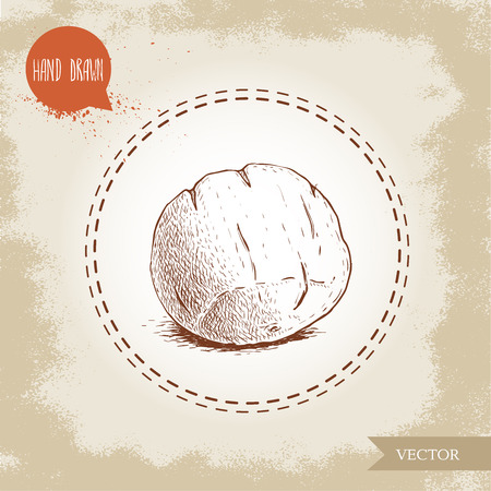 Closed capsule of bertholletia. Brazilian nuts fruit sketch style. Hand drawn illustration of exotic nut. Vector art isolated on old background.