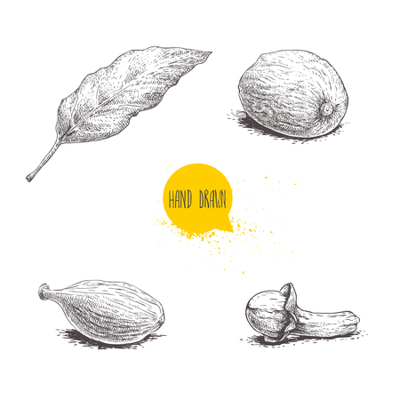 Hand drawn sketch spices set. Bay leaf, nutmeg, cardamom and clove. Herbs, condiments and spices vector illustration isolated on white background.