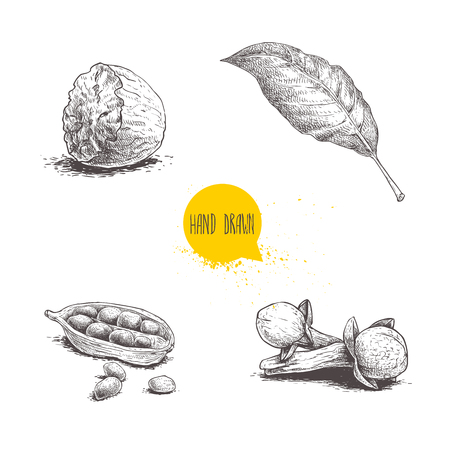 Hand drawn sketch spices set. Bay leaf, half of nutmeg, cardamom with seeds and cloves. Herbs, condiments and spices vector illustration isolated on white background. Иллюстрация