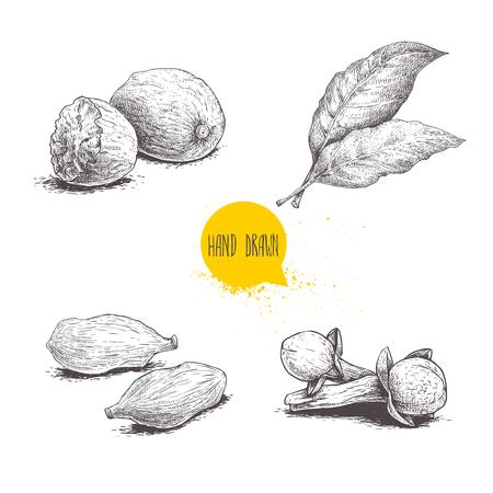 Set di spezie schizzo disegnato a mano. Foglie di alloro, gruppo noce moscata, cardamomo e chiodi di garofano. Erbe, condimenti e spezie illustrazione vettoriale isolato su sfondo wite.