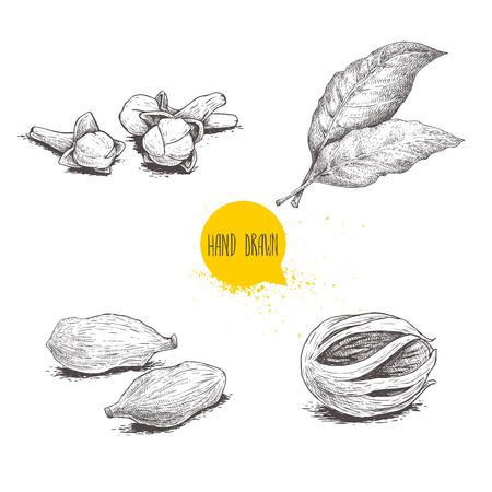 Handgezeichnete Skizze Gewürze Set. Lorbeerblätter, Muskatnussfrüchte, Kardamom und Nelken. Kräuter-, Gewürz- und Gewürzvektorillustration lokalisiert auf weißem Hintergrund. Vektorgrafik