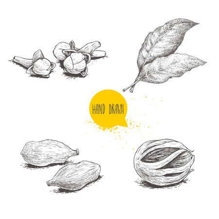 Hand drawn sketch spices set. Bay leaves, nutmeg fruit, cardamoms and cloves. Herbs, condiments and spices vector illustration isolated on white background.