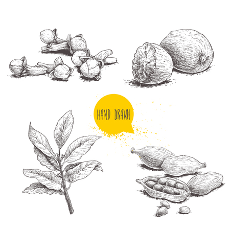 Hand drawn sketch spices set. Bay leaves branch, nutmegs, cardamoms and cloves. Herbs, condiments and spices vector illustration isolated on white background.