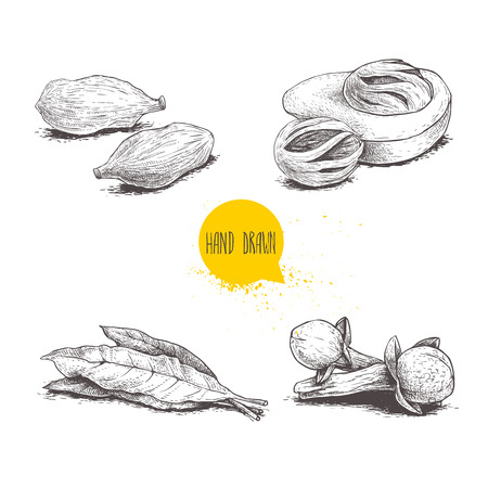 Hand drawn sketch spices set. Bay leaves, nutmegs, cardamoms and cloves. Herbs, condiments and spices vector illustration isolated on white background.