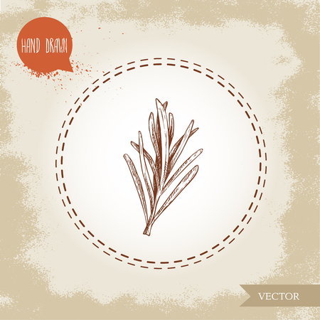 Hand drawn sketch style rosemary branch. Herbs and spices. Italian and Mediterranean food ingredient. Best for restaurant menu, stores and markets. Vector illustration.