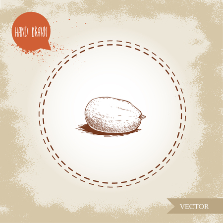 Hand drawn sketch style peanut kernel. Roasted or fresh seed isolated on old looking background. Organic food, cosmetic component. Vector illustration.