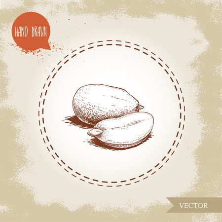 Hand drawn sketch style peanut kernels group. Roasted or fresh seeds isolated on old looking background. Organic food, cosmetic component. Vector illustration.