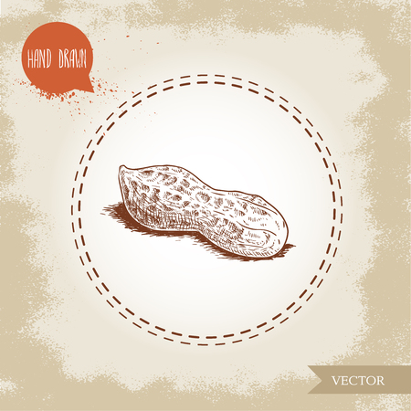 Hand drawn sketch style whole peanut pod. Isolated on old looking background. Organic food, cosmetic component. Vector illustration.