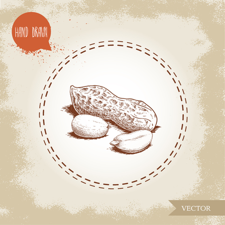 Hand drawn sketch style peanuts group. Roasted or fresh seeds and peanut pod isolated on old looking background. Organic food, cosmetic component. Vector illustration.
