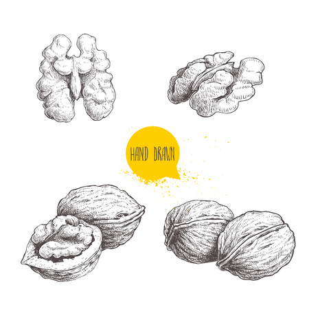 Hand drawn sketch style walnuts set.  Single whole, half and walnut seed. Eco healthy food vector illustration. Isolated on white background. Retro style. Ilustracja