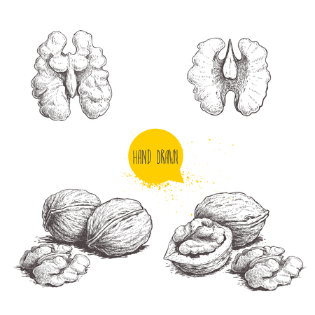 Hand drawn sketch style walnuts set.  Single whole, half and walnut seed. Eco healthy food vector illustration. Isolated on white background. Retro style. Vectores