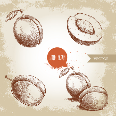 Hand drawn plums set. Single, whole and group. Collection of retro style fruits. Vector illustrations isolated on old looking background.