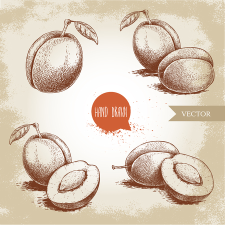 Hand drawn plums set. Single, whole and group compositions. Collection of retro style fruits. Vector illustrations isolated on old looking background.