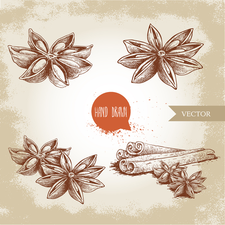 Anise star sketches set. Single, batch and composition with cinnamon sticks. herbs and condiment retro style hand drawn collection. Vector illustrations.
