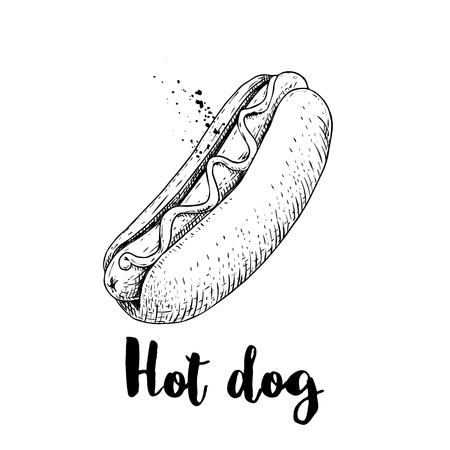 Hot dog sketch hand drawn. Fast food retro illustration. Fresh bun with grilled sausage and mustard or ketchup. Great for menu designs, posters. Isolated on white background.