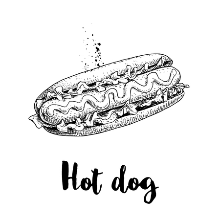Hot dog sketch hand drawn. Fast food retro illustration. Fresh bun with grilled sausage and mustard or ketchup and lettuce leaves. Great for menu designs, posters. Isolated on white background.