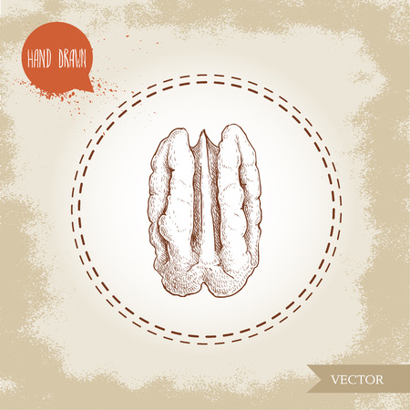 Pecan nut. Hand drawn sketch style half of pecan nut seed core. Organic snack vector illustration isolated on retro background.