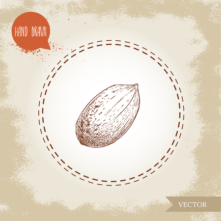 Pecan nut. Hand drawn sketch style whole pecan nut kernel. Organic snack and food vector illustration isolated on vintage background.