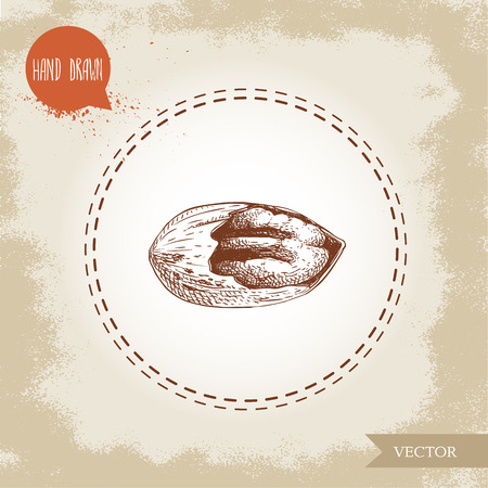 Pecan nut. Hand drawn sketch style cracked pecan nut kernel. Organic snack and food vector illustration isolated on vintage background.  イラスト・ベクター素材