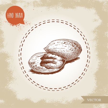 Pecan nuts. Hand drawn sketch style whole and cracked pecan nut kernels. Organic snack and food vector illustration isolated on vintage background.  イラスト・ベクター素材