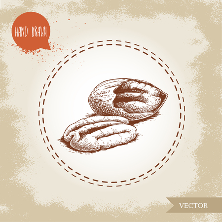 Pecan nuts. Hand drawn sketch style peeled and cracked pecan nuts. Organic snack and food vector illustration isolated on vintage background.