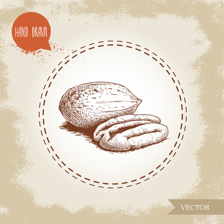 Pecan nuts. Hand drawn sketch style peeled and whole pecan nuts. Organic snack and food vector illustration isolated on vintage background.