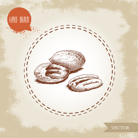 Pecan nuts. Hand drawn sketch style peeled and whole pecan nuts composition. Organic snack and food vector illustration isolated on vintage background. Illustration