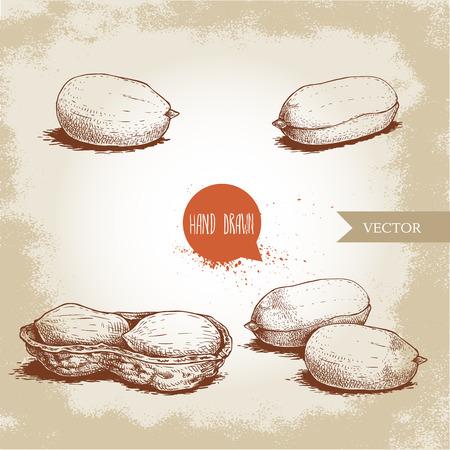 Ensemble de cacahuètes de style croquis dessinés à la main. Alimentation biologique. Graine et cosse d'arachide. Illustration vectorielle de style rétro isolée sur fond vintage.