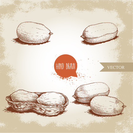 Set di arachidi in stile schizzo disegnato a mano. Cibo organico. Baccello del seme e dell'arachide. Illustrazione di vettore di stile retrò isolato su sfondo d'epoca.