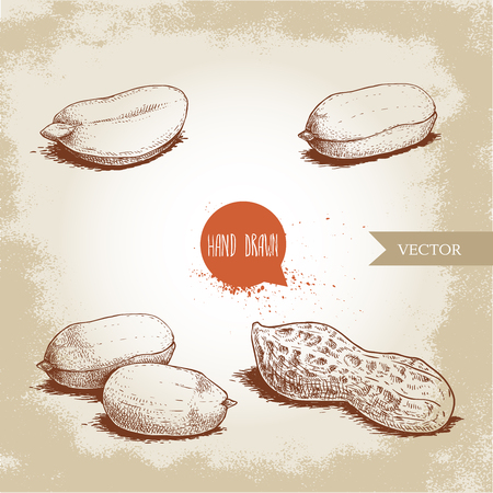 Hand drawn sketch style peanuts set. Organic food. Seed and peanut pod. Retro style vector illustration isolated on vintage background. Stock Vector - 119405663