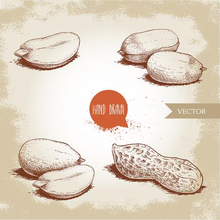 Ensemble de cacahuètes de style croquis dessinés à la main. Alimentation biologique. Compositions de graines et gousse d'arachide. Illustration vectorielle de style rétro isolée sur fond vintage. Vecteurs