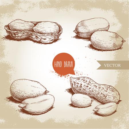 Ensemble de cacahuètes de style croquis dessinés à la main. Alimentation biologique. Compositions de graines et de gousses d'arachide . Illustration vectorielle de style rétro isolée sur fond vintage.