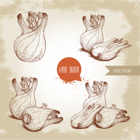 Fennel bulbs set. Hand drawn sketch style illustrations. Whole and cutted composition. Herbs, spices and condiments. Isolated on retro background. Çizim