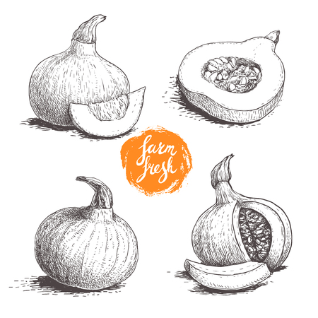Hokkaido pumpkins set. Sketch style hand drawn vector illustration collection. Whole and cut pumpkins. Autumn food drawing. Best for package and posters.