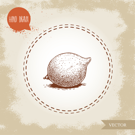 Fresh macadamia nut. Hand drawn sketch style vector illustration on old background. Food and cosmetic oil ingredient drawing. Freshly ripped fruit.