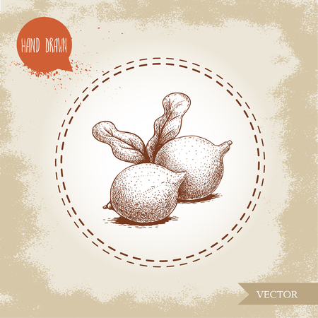 Fresh macadamia nuts with leaves. Hand drawn sketch style vector illustration on old background. Food and cosmetic oil ingredient drawing. Freshly ripped fruit.