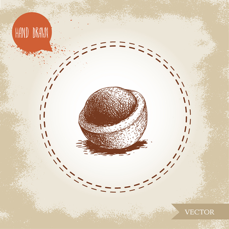 Peeled macadamia nut shell. Hand drawn sketch style vector illustration isolated on retro background. Botanical drawing. Australian nut. Best for food and cosmetics with oil designs.