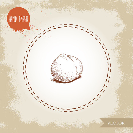 Peeled macadamia nut seed. Hand drawn sketch style vector illustration isolated on retro background. Botanical drawing. Australian nut. Best for food and cosmetics with oil designs.