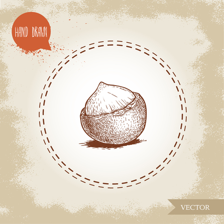 Peeled macadamia nut seed with shell. Hand drawn sketch style vector illustration isolated on retro background. Botanical drawing. Australian nut. Best for food and cosmetics with oil designs. Illustration