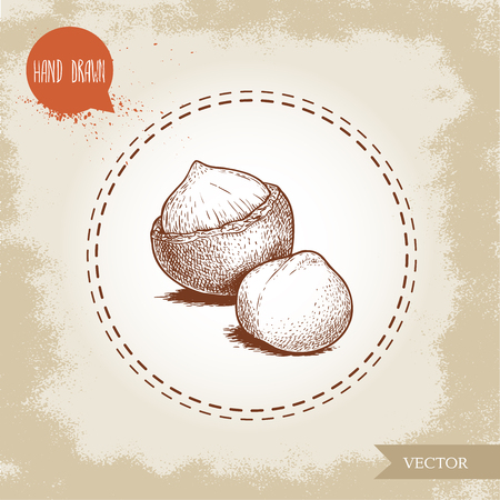 Peeled macadamia nut seed and with shell. Hand drawn sketch style vector illustration isolated on retro background. Botanical drawing. Australian nut. Best for food and cosmetics with oil designs. Ilustrace