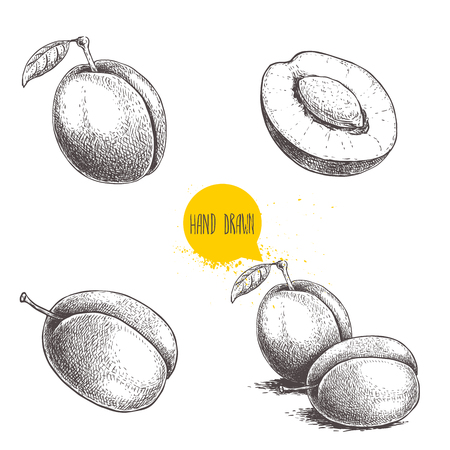 Fresh plums. Whole and groups. Hand drawn sketch style vector illustrations. Best for markets and package designs. Standard-Bild - 123496378