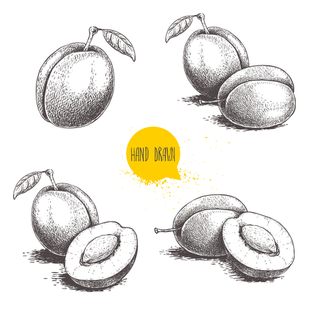 Fresh plums. Whole and groups. Hand drawn sketch style vector illustrations. Best for markets and package designs. Standard-Bild - 123496379