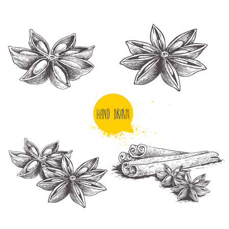 Anise star sketches set. Single, batch and composition with cinnamon sticks. Herbs and condiment retro style hand drawn collection. Vector illustrations isolated on white background. 版權商用圖片 - 120946929