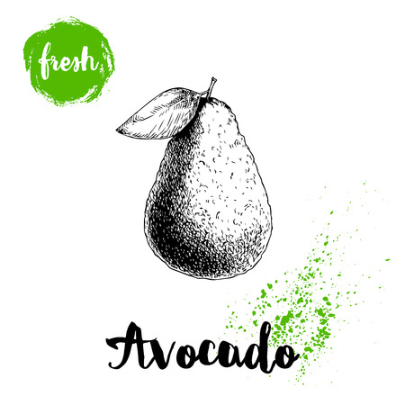 Avocado with leaf. Sketch style hand drawn tropic fruit vector illustration. Detailed food drawing. Best for package and posters.