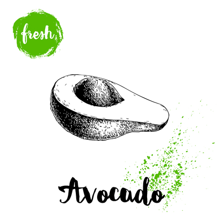 Avocado with leaf. Half of avocado with seed. Sketch style hand drawn tropic fruit vector illustration. Detailed food drawing. Best for package and posters.