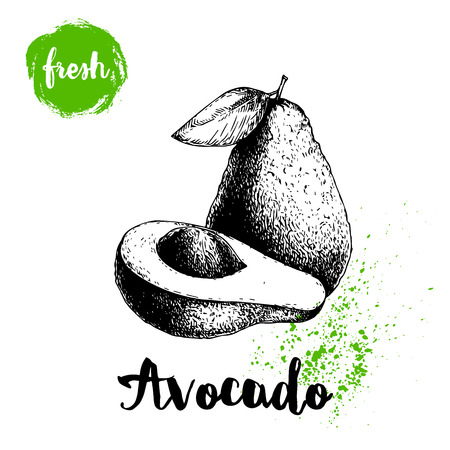 Avocado with leaf. Whole and half of avocado with seed. Sketch style hand drawn tropic fruit vector illustration. Detailed food drawing. Best for package and posters.